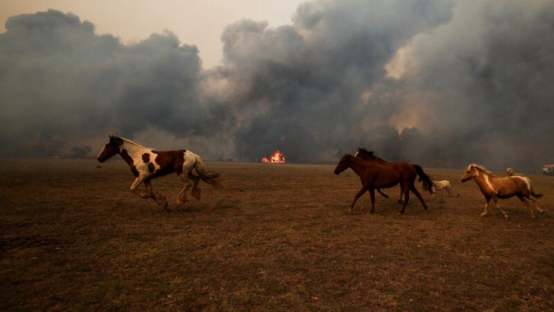 International Equestrian community comes together to support Australian fire relief
